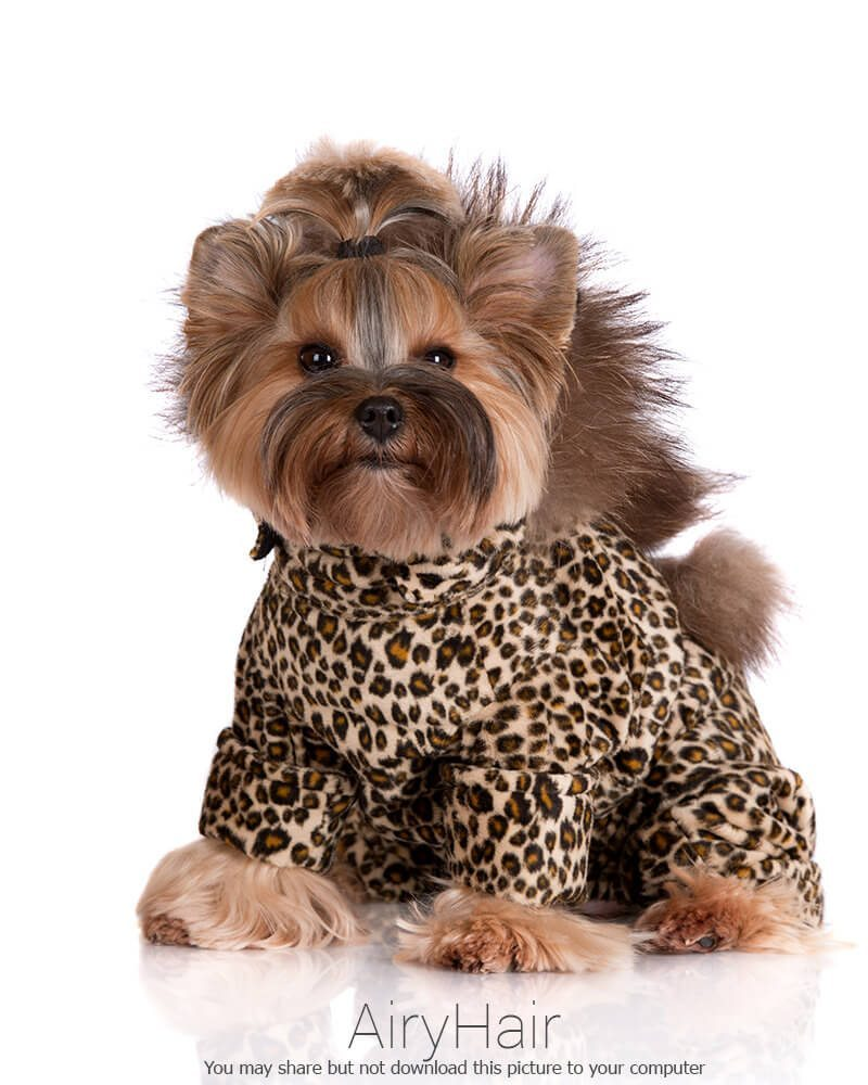 Top 10 Hairstyles Clothes For Dogs