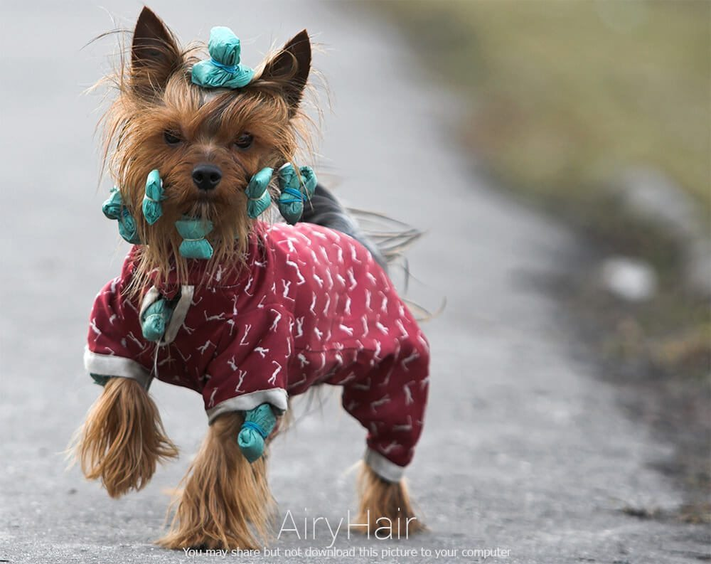 Enjoyable Top 10 Hairstyles Clothes For Dogs Hairstyles For Women Draintrainus