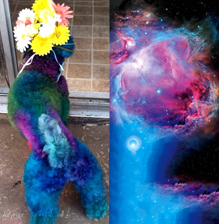 Nebula hairstyle for dog