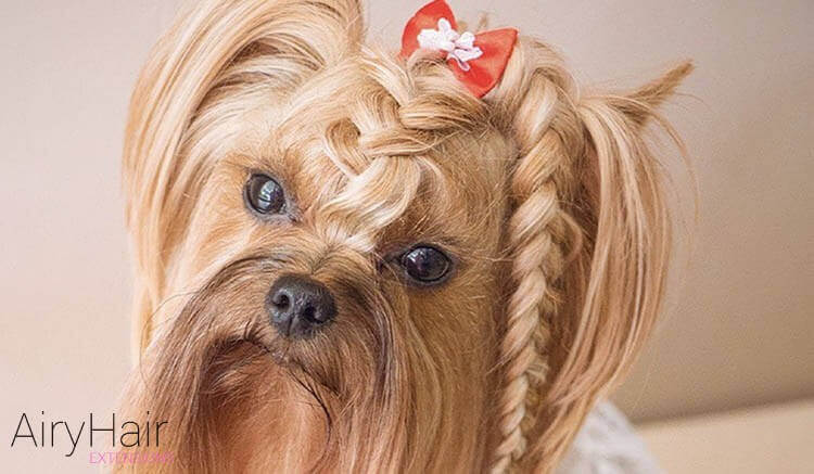 Image result for blonde dogs