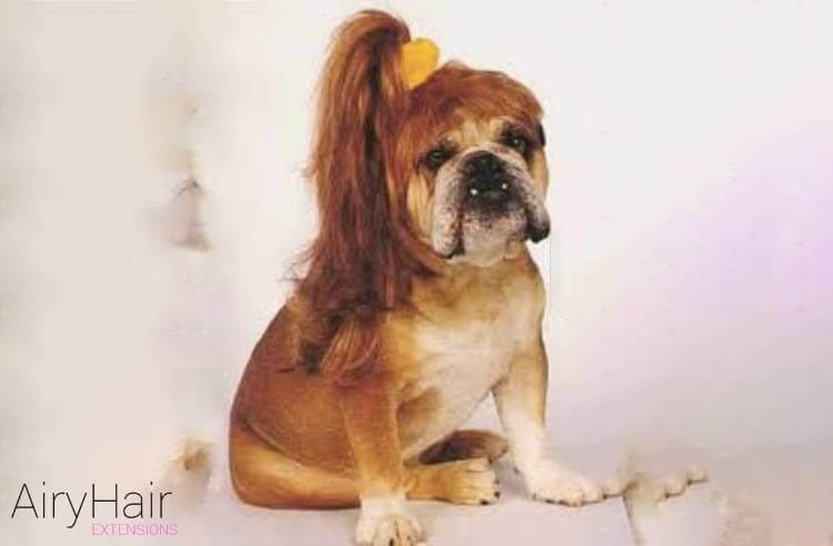 Top 10 Hairstyles And Clothes Inspired By Dogs