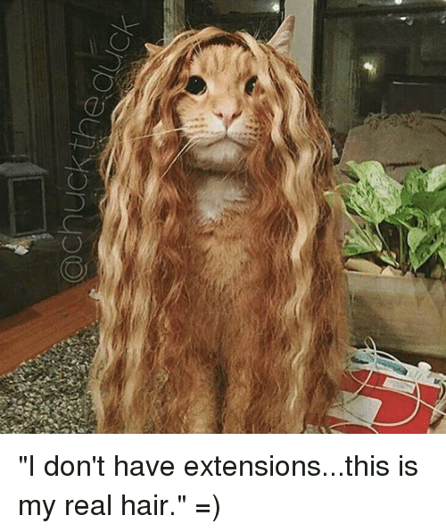 Top 17+: Best of Funny Hair & Hair Extension
