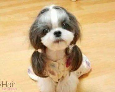 britney-dog